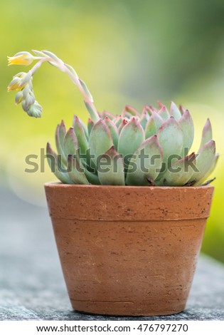 Nice cactus with flower and blurred background