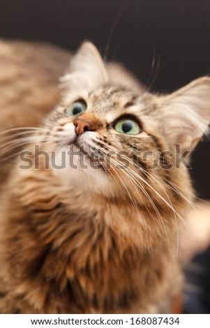 nice cat - stock photo