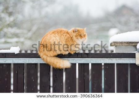 Nice cat on the snow fence