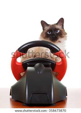 Nice Cat playing a video game console steering wheel with deadpan expression on his face fluffy, isolated on white - stock photo