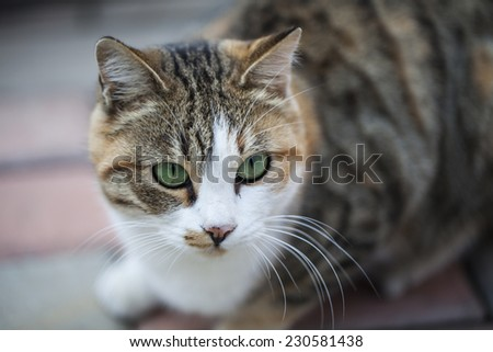 Nice cat with green eyes shot in summer soft colors