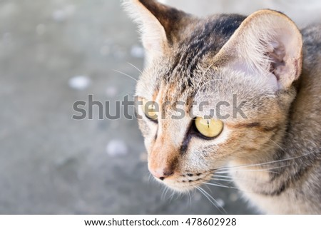 Nice Cat with Street Background