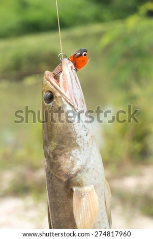 Nice catch perch caught using fishing rod and artificial lure - stock photo