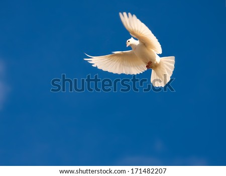 Nice close-up photo of white flying pigeon