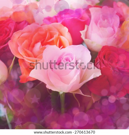 Nice colorful roses blur  background