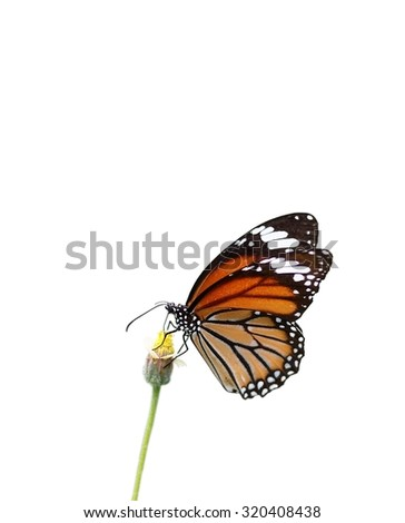 nice colorful tropical butterfly in nature on grass flower under natural sunlight die-cut isolated on white background - stock photo