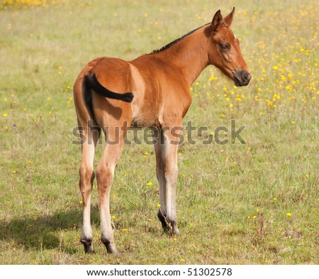 Nice colt in the field over the green grass