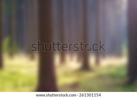 Nice coniferous forest, blur background - stock photo