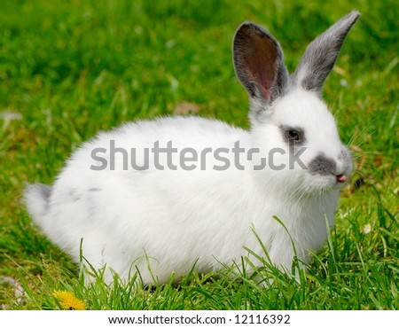 Nice easter rabbit on a green lawn.