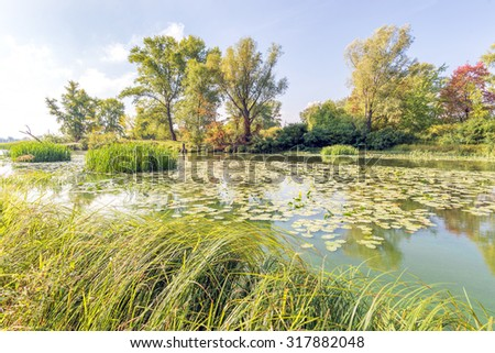 Nice end of summer day close to the Dnieper river with Nuphar lutea water lilies and Typha latifolia reeds in the water. Trees in the background - stock photo