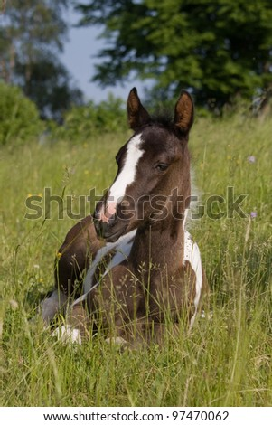 Cute Foal Stock Images Royalty Free Images Amp Vectors