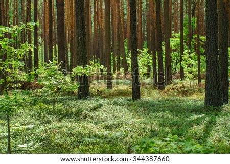 nice forest - stock photo