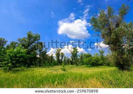 Nice green meadow in forest - stock photo