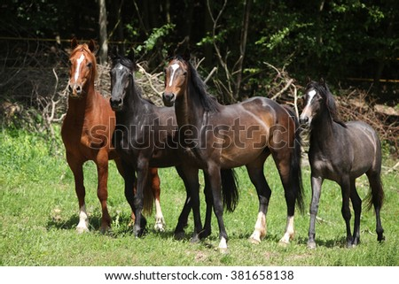 Nice herd of horses standing together on green pasturage - stock photo