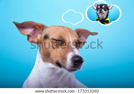 Nice Jack Russel terrier dog is isolated on a blue background. Animal portrait. Playful dog is on a colorful background. Collection of funny animals
