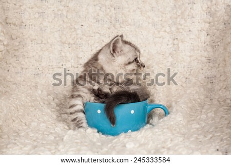 nice kitten in a cup  - stock photo