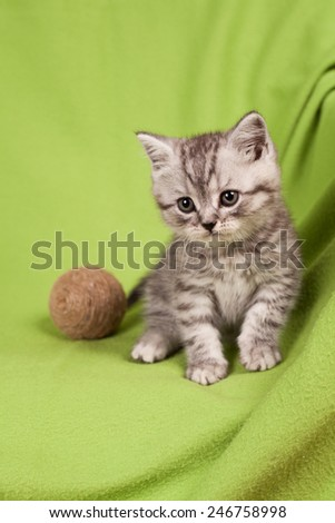 nice kitten on a green background - stock photo