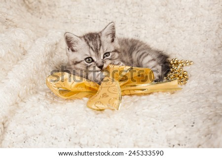nice kitten with a yellow bow  - stock photo