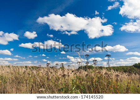 Nice landscape with summer meadow under blue sky