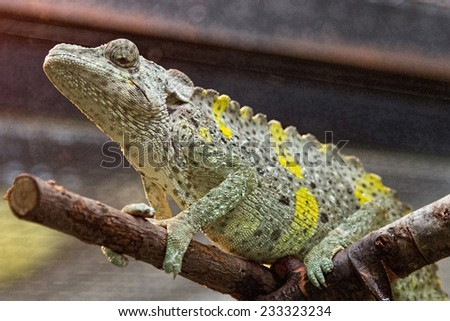 nice lizard jungle areas with green tones - stock photo