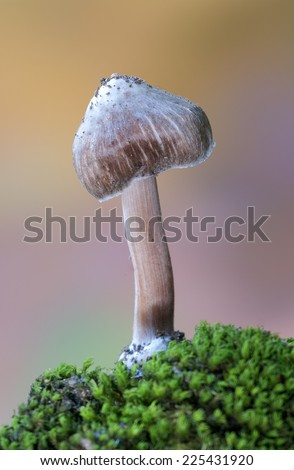 Nice mushrooms with autumnal background - stock photo