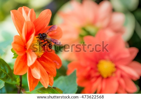 Nice orange flowers with a bee on it