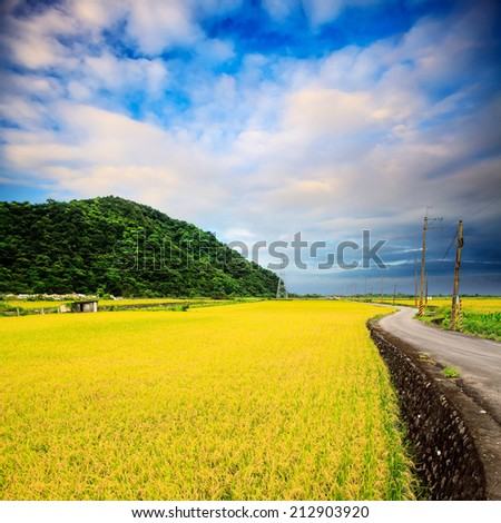 Nice paddy place for adv or others purpose use - stock photo