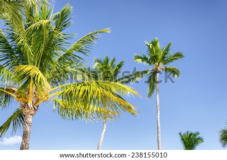 Nice palm trees in the blue sunny sky - stock photo