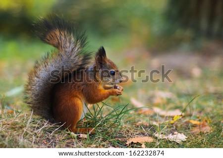 Nice pretty squirrel sitting sideways macro very close - stock photo