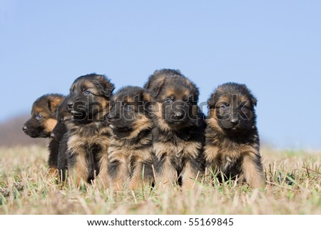 Nice puppies sitting on meadow - stock photo