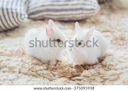 nice rabbits - stock photo