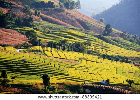 nice rice terrace in north Thailand.