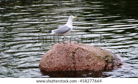 Nice seagull stands on a big stone in a lake. Beautiful seascape. Amazing sea birds. The gull and the wonderful mirrored water surface. Migratory birds. European herring gull. Wildlife. - stock photo