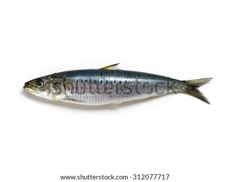 Nice shaped Iwashi Sardines isolated on white.