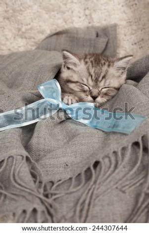 nice sleeping kitten with a bow  - stock photo