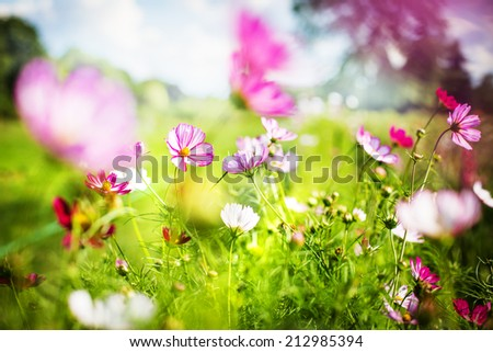 Nice spring or summer day with beautiful fresh field flowers - stock photo