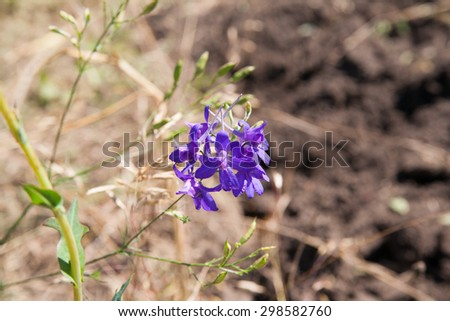 Nice summer meadow with harebells, shallow depth of field with focus on one of the harebells - stock photo