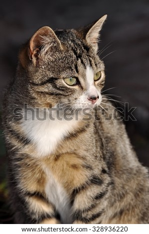 nice tabby cat outside