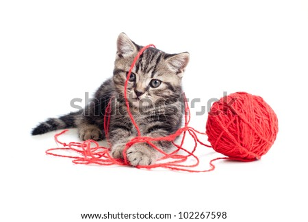 nice tabby kitten playing red clew or ball - stock photo