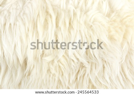 nice texture of white fur , use for background