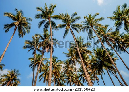 Nice view of the sea with palm trees - stock photo