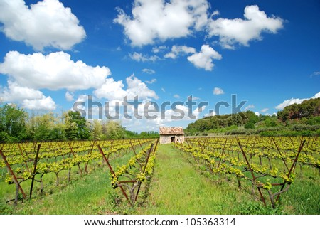 nice view of winegrowing in France Alsace - stock photo