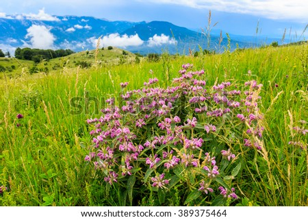 nice wild flowers on meadow in crimean mountains, Ukraine - stock photo