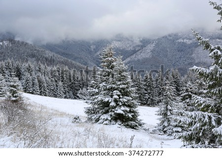 nice winter scene in mountains