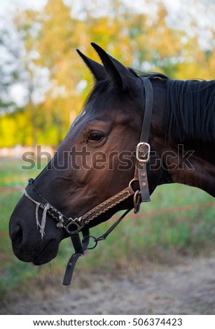 Nice young horse in autumn park
