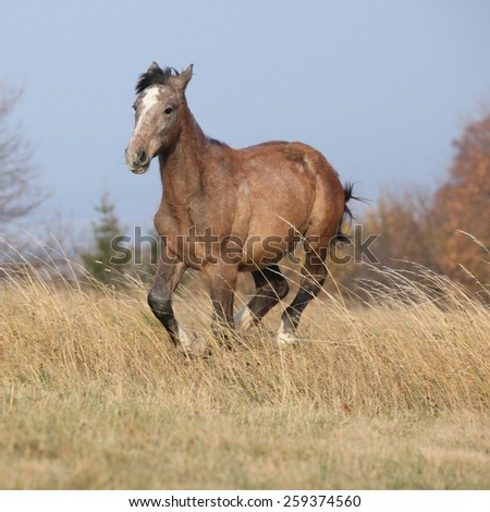 Nice young horse running in autumn freedom alone