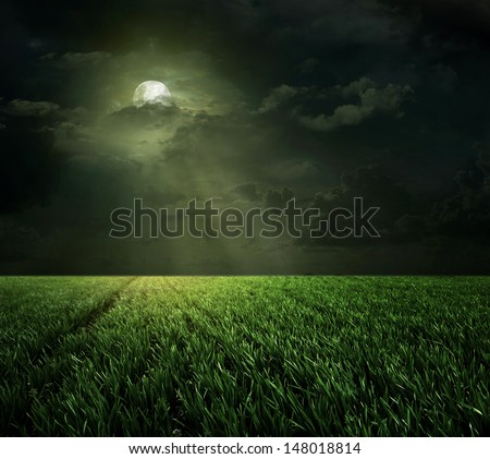 Night and the moon in the meadow  - stock photo