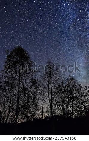 Night blue sky with lot of shiny stars, many trees are at front - stock photo