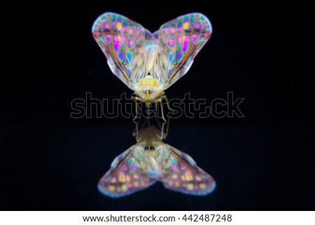 night butterfly and shadow on black background - stock photo