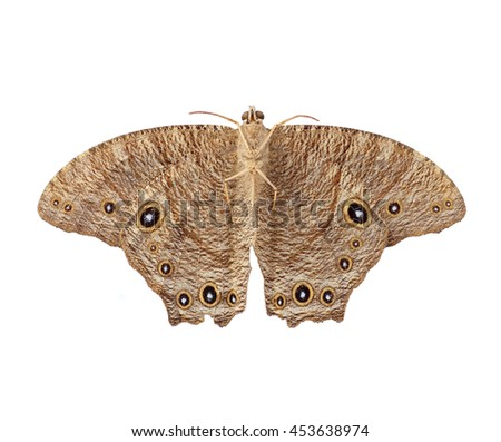 night butterfly isolated on white background - stock photo